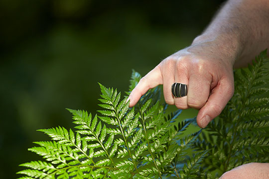 I point out the delicate edges of the Florida Fern- Rumohra Andiantiformis or Leather Leaf at FernTrust!