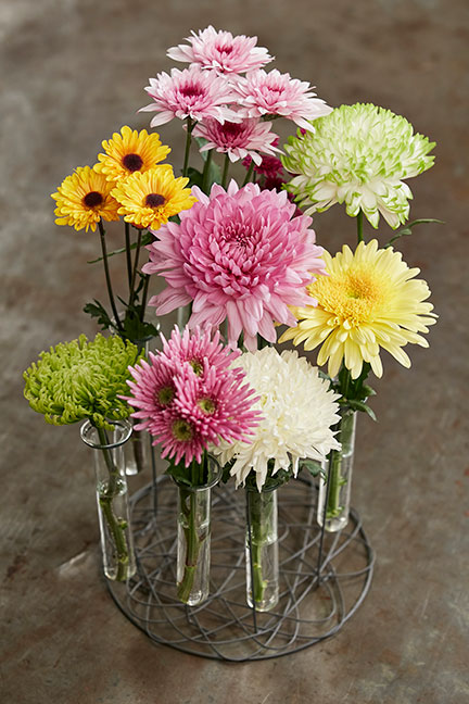 Life in Bloom's featured flower are Chrysanthemums.