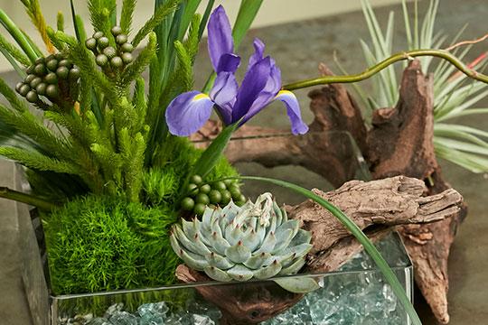 """J explores the art of flowers this week on """"J Schwanke's Life in Bloom"""""""