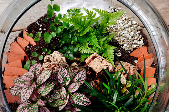 J explores Terrariums and Life under Glass on this Episode of J Schwanke's Life in Bloom!
