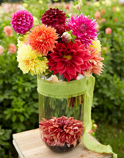 J creates a flower arrangement featuring a flower frog from the gorgeous Dahlias at Hamilton Dahlia Farm