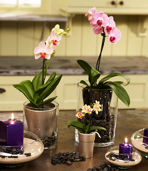 Join J on Life in Bloom for tips and tricks for growing and caring for- blooming orchids!