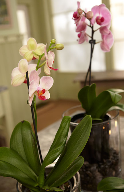 A Tablescape is easy to create using blooming orchids plants!
