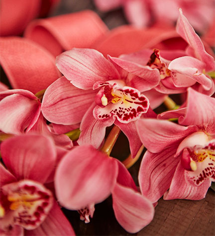 Blush Pink Cymbidium Orchids are featured in this week's Craft in Bloom!