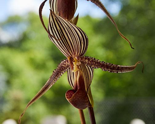 Featured flower- the Lady Slipper Orchid - on J Schwanke's Life in Bloom!