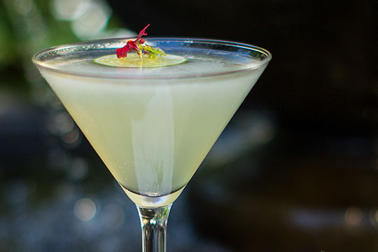 J shares is recipe for a Juicy Frog Cocktail- inspired by the visitors to the garden fountain!