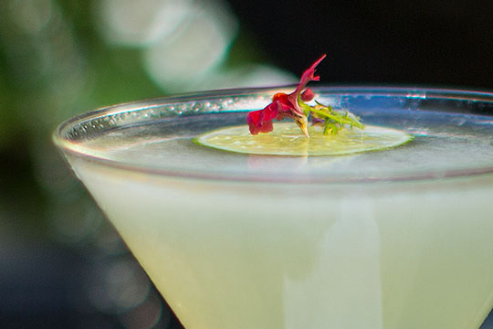 Check out the Juicy Frog Cocktail - this week's #flowercocktailhour on J Schwanke's Life in Bloom!