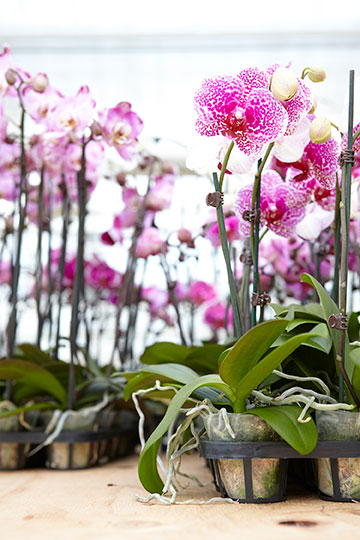 J shares his easy tips for keeping orchids happy inside your home on Life in Bloom!