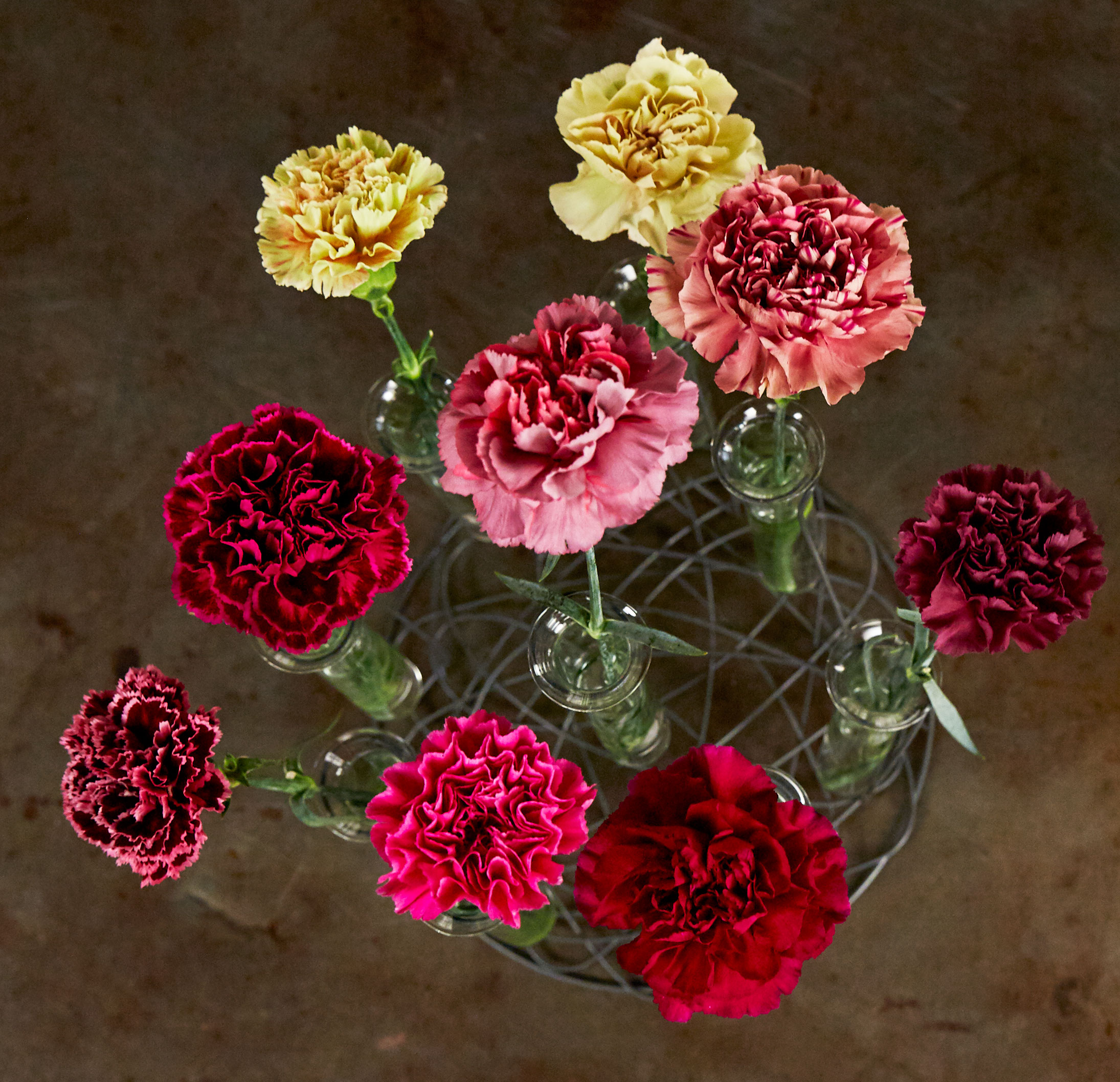 Have you seen Carnations like these?