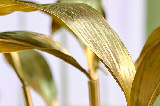 Bamboo as a vase