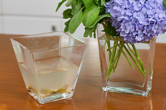 Longer lasting flowers and NO Funky Water!