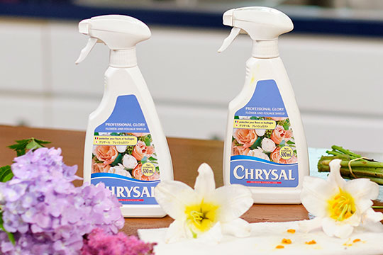 Longer Lasting Flowers – with Chrysal Glory!
