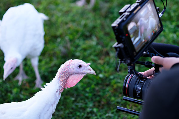 It's Time for a Turkey Close up at Crane Dance Farm!