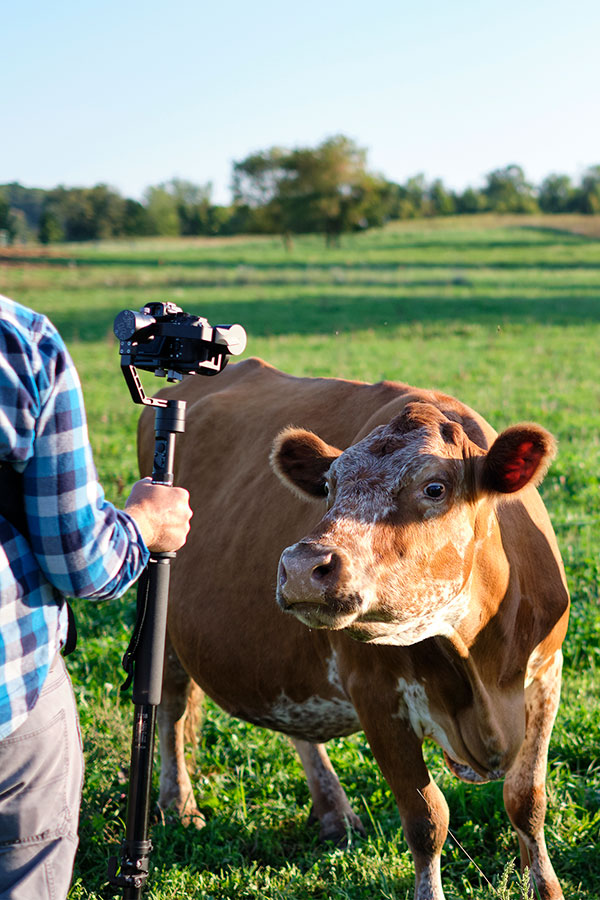 Suzy Q is ready for her close up at Crane Dance Farm