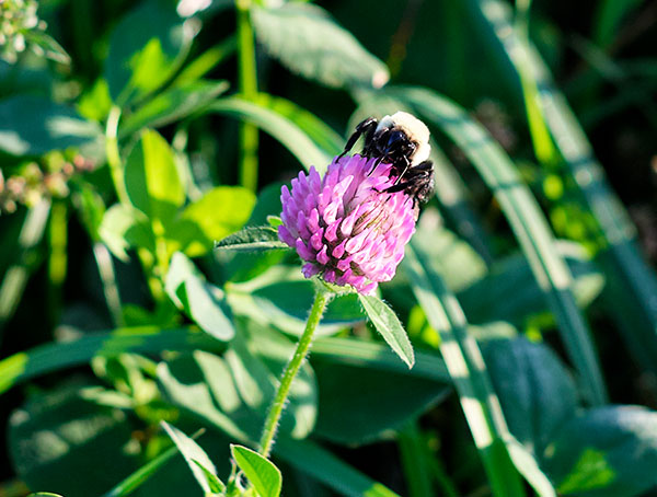 Perennial Pastures are the Bees Knees... at Crane Dance farm- and help insure they are making the Earth a better place!