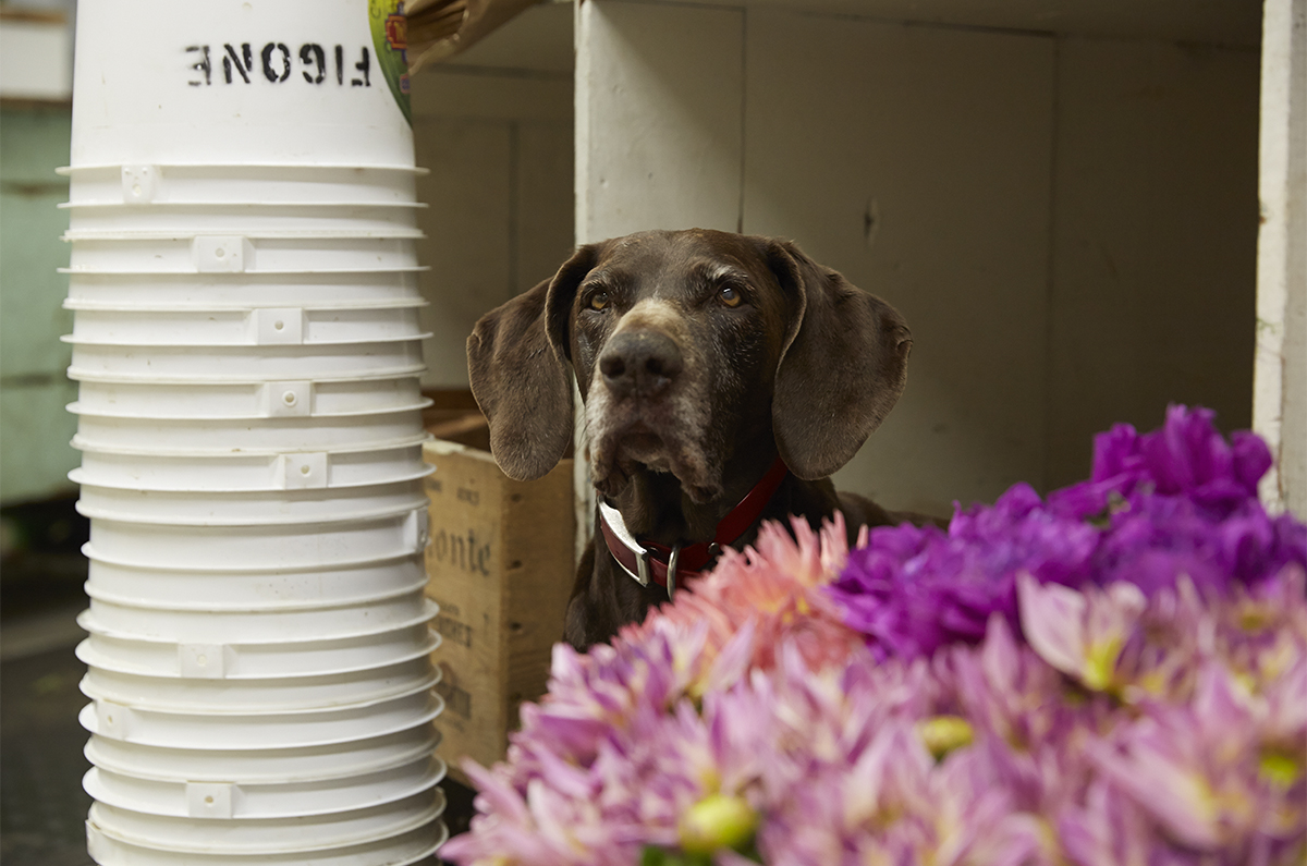 Sally- the Flower cubby dog- at Figone- one of my favorite dogs of all time!