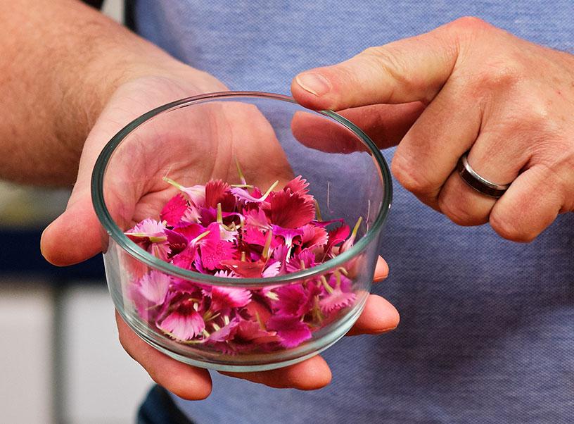 Dianthus Petals are Sweet Edibles