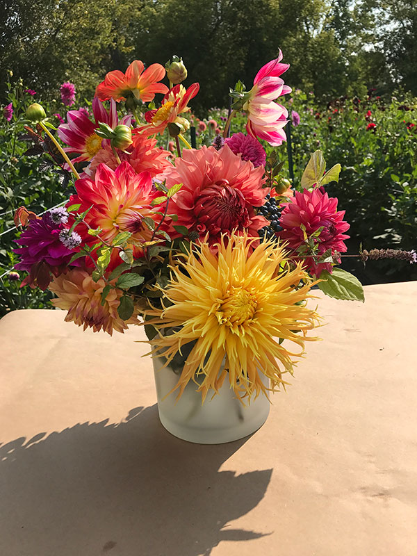 This yellow dahlia in the center is a Laceniated Variety- with a fringed or shredded petal look!