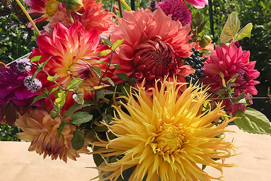 Learn to Arrange Dahlias- with J's favorite tips for Flower Arranging!