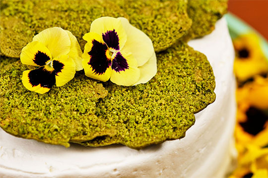Host J Schwanke gives a peek into the magic of moss.  Moss isn't just for deep hikes in the woods. In this episode, moss takes over arranging, home décor, baking, and cocktail making—bringing its wonder and awe into daily life.