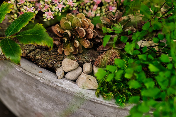 Tiny elements like rocks and moss help to create this forest landscape arrangement.