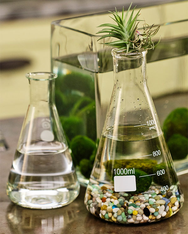 Chemistry Flasks- make a great home for Marimo Balls.