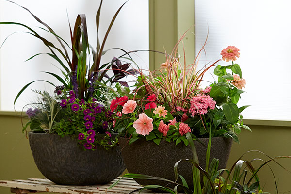 Container Gardens are a fun way to add flowers to your life- no matter your space challenges!