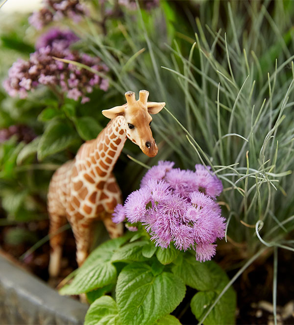 I love adding Action Figures- or in this case a Zoo Animal or two- to engage or tell a story with my container gardens!
