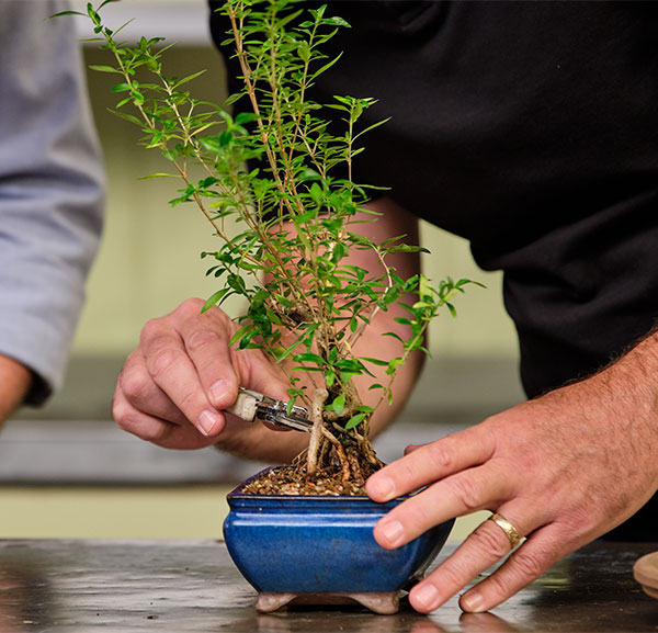 Dusty showed us how to prune and trim our Bonsai Trees for best results!
