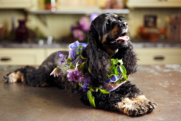 Ellie joins me - as I create a Clematis Garland- using on Flower Stems- and Ribbon- for an ultra safe- and beautiful Flower Garland for your pet to wear!