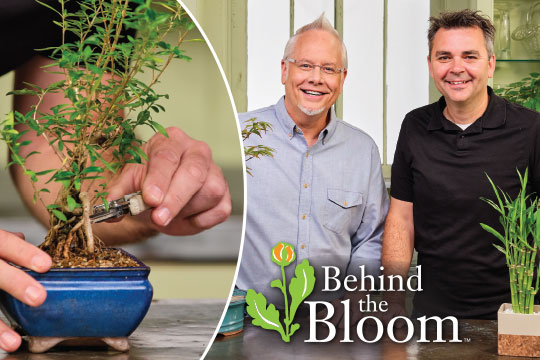 Behind the Bloom_with Dusty Brown and Bonsai Trees