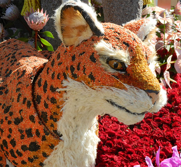 Modesto Busto- AIFD- creates the faces of the animals- to exquisite detail - for Fiesta Parade Floats in Pasadena!