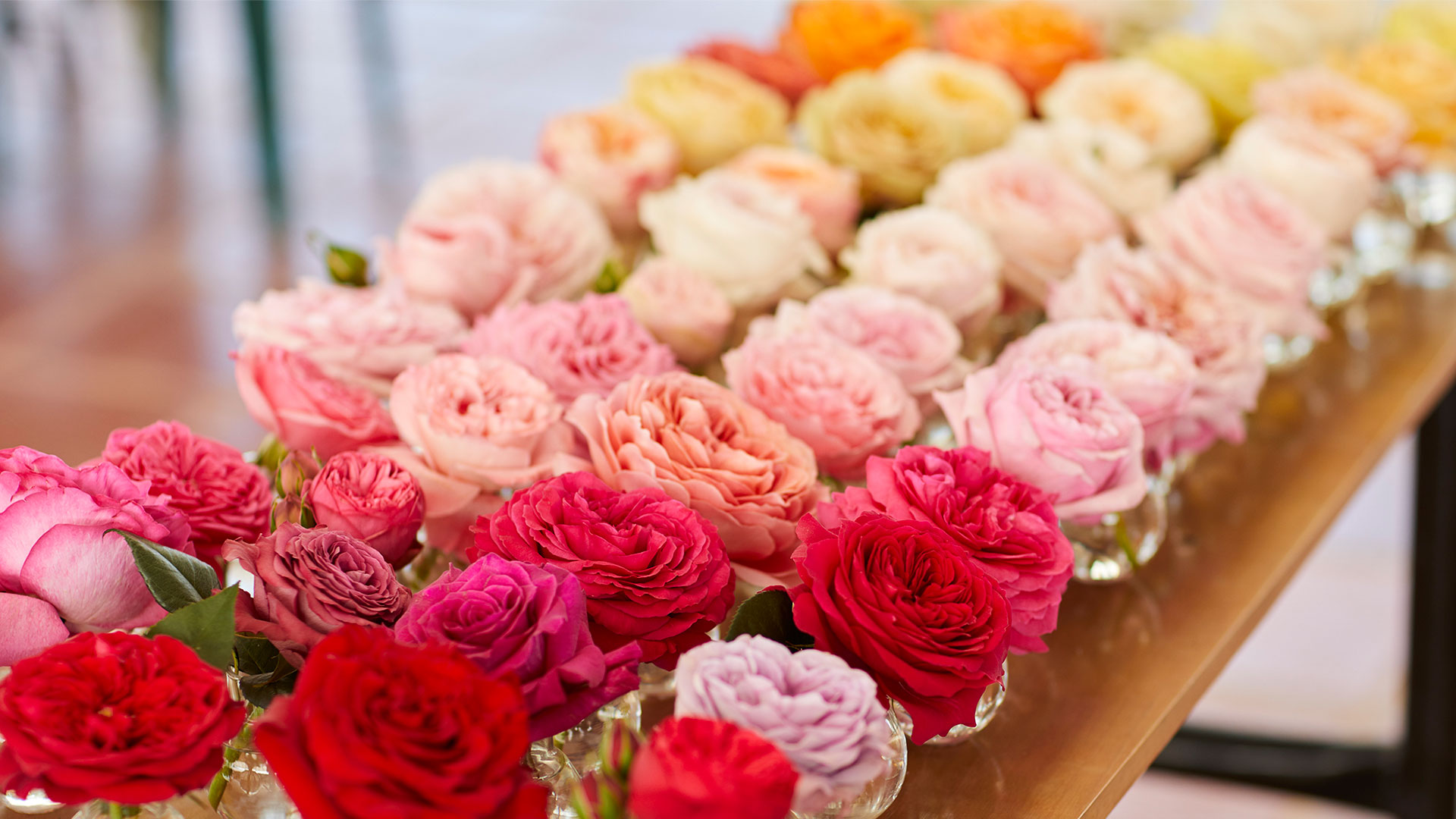 Everything's Coming Up Roses Host J Schwanke shares some history behind the beloved rose and why this flower is so much more than a Valentine's Day gesture. Learn to make rose tea, a rose-inspired veggie tart, and visit a rose farm in South America… everything's coming up roses!