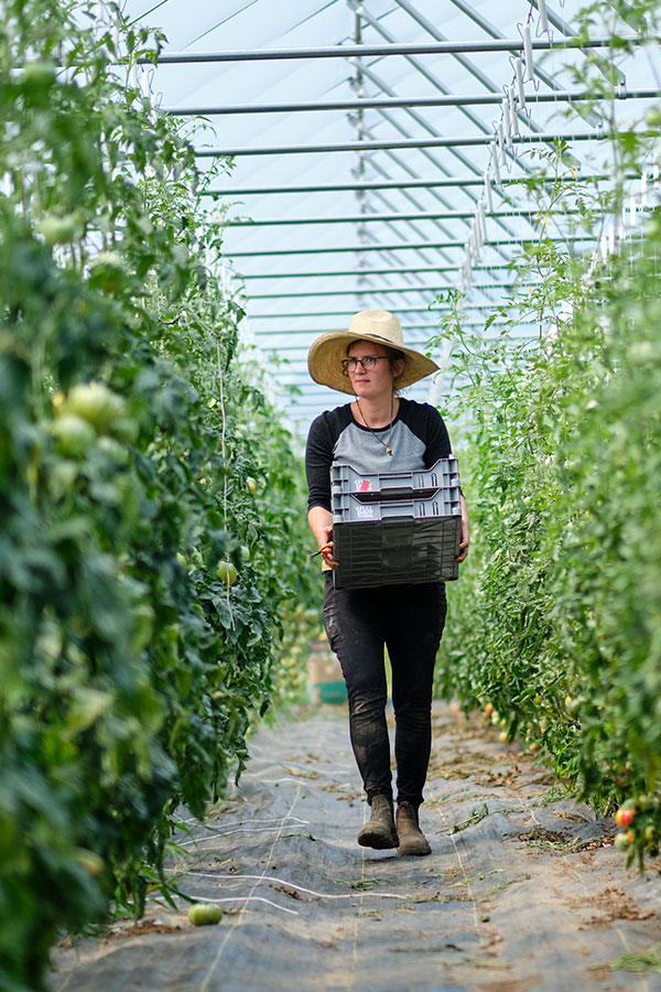 Jamie Wilbraham harvests produce from the Greenhouse Tomatoes at Full Hollow Farm!