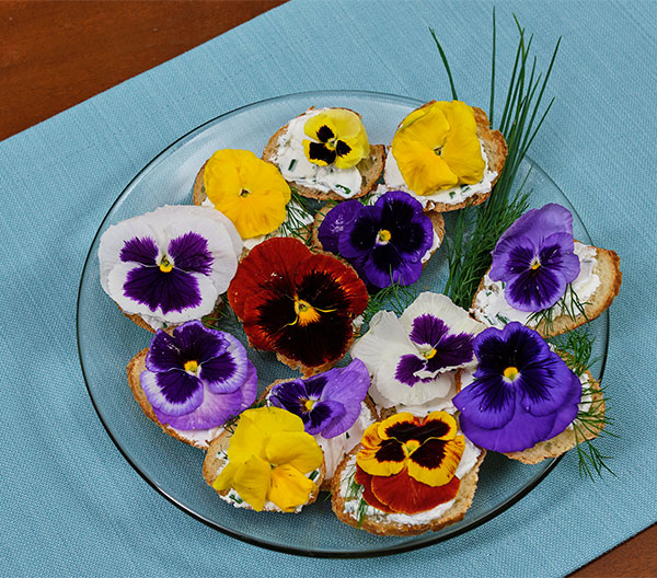 You Hors d'oeuvres can wear flowers too- with this fun recipe for Chive Goat Cheese Sandwiches with Organic Pansies!