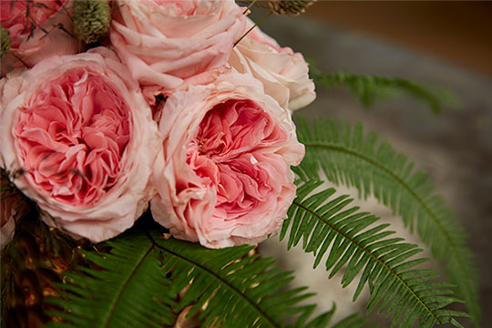 Mayra's Bridal Pink Garden Rose from Alexandra Farms and Joey Azout!