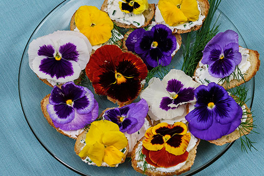 Create this Pansy Goat Cheese Sandwiches for your next party!