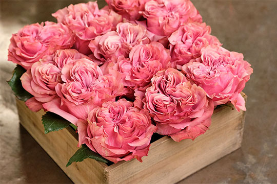 Fresh Ideas for Arranging Garden Roses