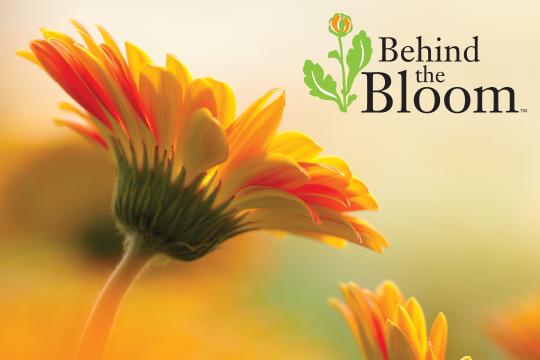 Behind the Bloom_KB Farms - a Visit to Kitayama Brothers
