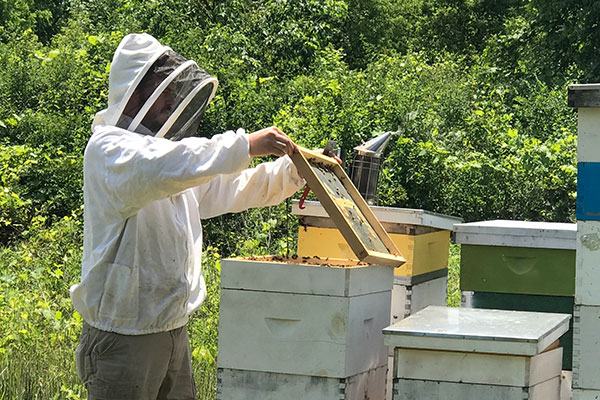 """""""Don't act like a bear"""" was Jason's sage advice- when dealing with his bees!"""