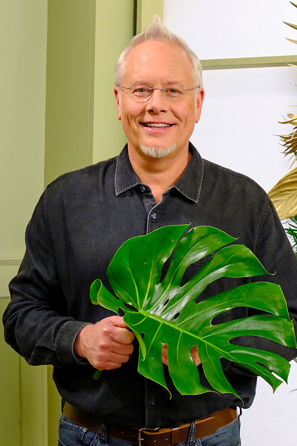 Plants and Foliage can add so much to our lives- the benefits are numerous- and we can enjoy a bit of Monstera Madness- in our Home!
