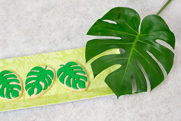 The Monstera has become such a popular Plant- and pictured here- with some cookies from my Friend Kara Bolt- (You'll meet her -and learn more about Cyclops Bakeshop in an upcoming show about Sunflowers!)