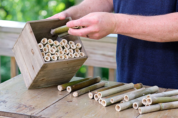 Bamboo and a simple wood crate- combine to create a Bee Hotel- to help house your local pollinators!