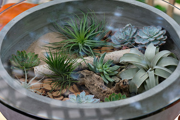 This is a fun project- and a great way to incorporate succulents and tillandsia- into a decorative table for your outdoor spaces!