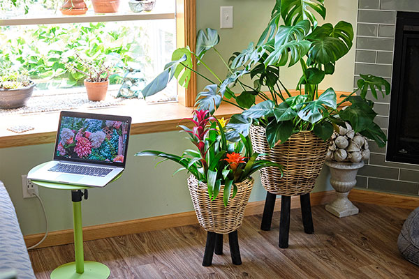 Plants take in CO2 and release oxygen- they are Nature's Air Purifiers- and with no parts to wear out or break down- Plants become an economical solution!