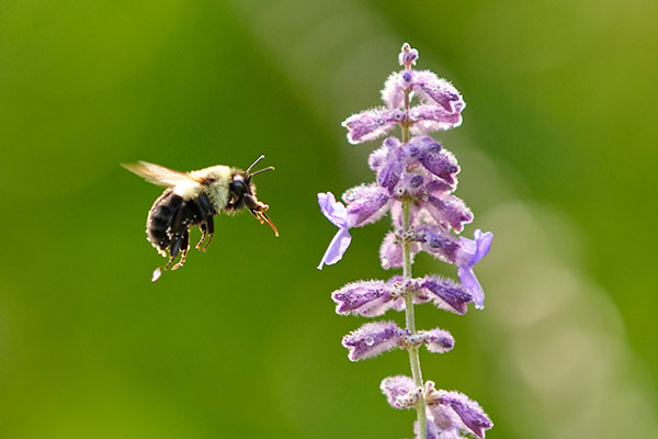Bees- as well as Butterflies, Hummingbirds, are Valuable Pollinators- we dedicate this Life in Bloom Episode to them!