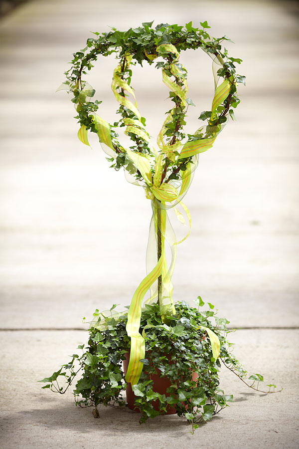 Decorating an Ivy Heart Topiary with ribbon is an easy way to dress up a topiary!