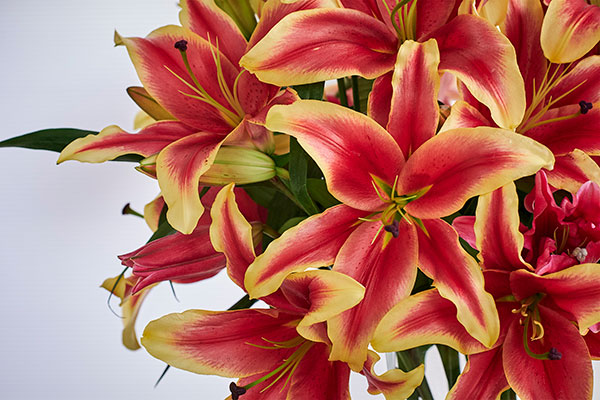Of course our featured flower is the Lily- and there is such a wide variety of shapes, colors and sizes... Lilies for Everyone!