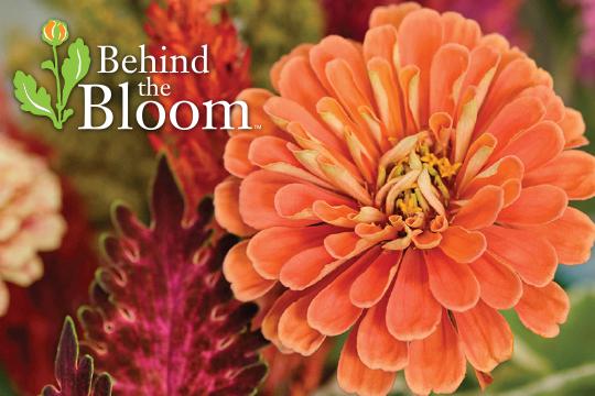 Behind the Bloom - Wild at Heart Arrangement
