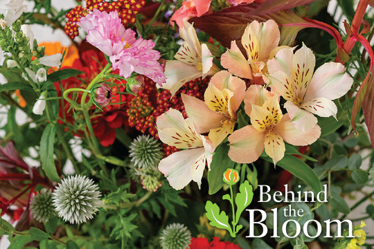 "Behind the Bloom_""Field of Flowers"" Arrangement"